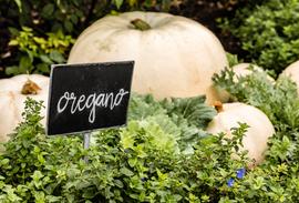 sweet pumpkins oregano