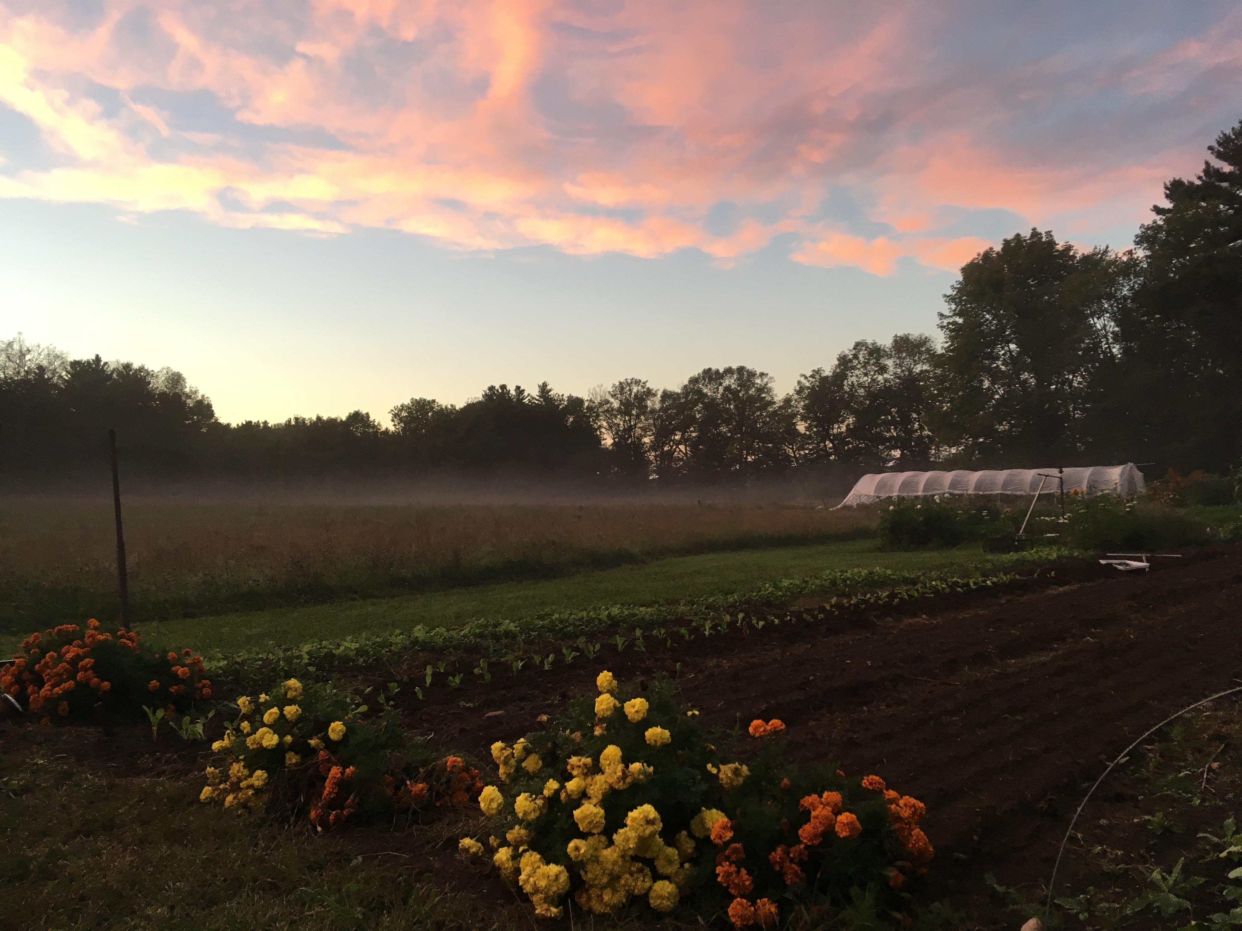 2018 Farm Field Sunset.jpeg