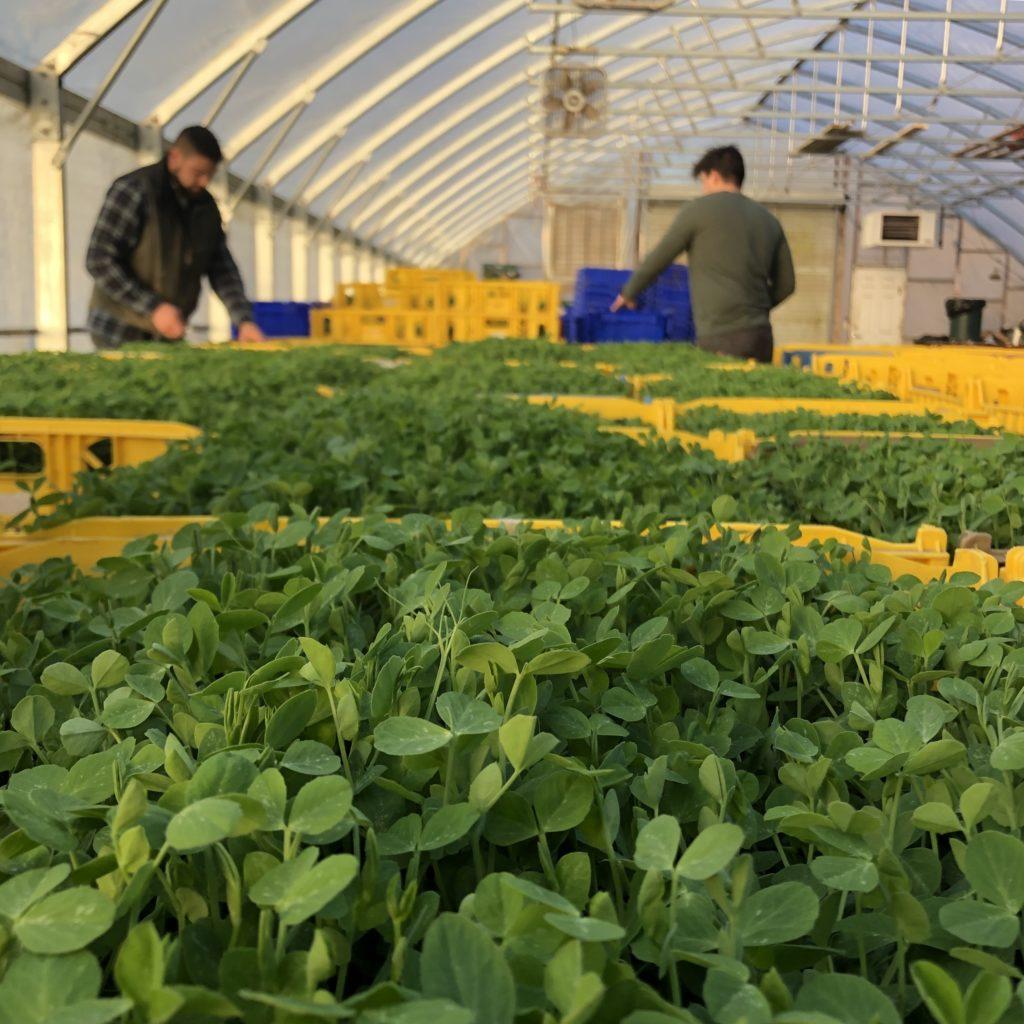 Siena Farms Greenhouse